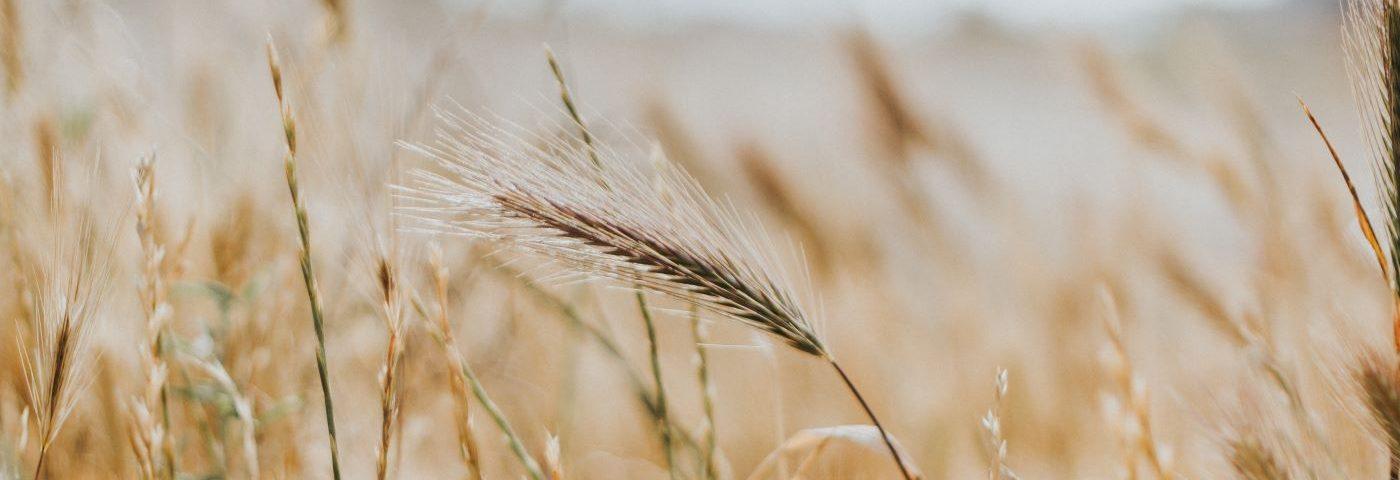 A fenntarthatóbb élelmiszertermelés kialakításának kihívásai