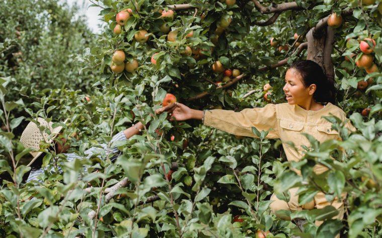 Mit kell tudni a FAO által életre hívott Globális Élelmiszer-ellátási Csúcsról?